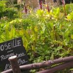 potager jardin aromatique - village bournat