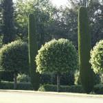 jardins manoir eyrignac - cypres et muriers