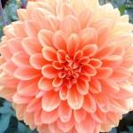 jardins manoir eyrignac - fleurs