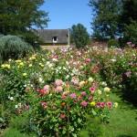 jardins manoir eyrignac - jardin fleuri