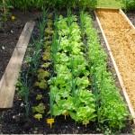 jardins manoir eyrignac - potager