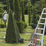 jardins manoir eyrignac - taille