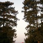 jardins manoir eyrignac - torii japonais