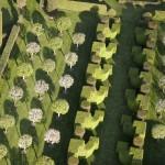 jardins manoir eyrignac - allee des charmes et pommiers