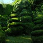 Jardins Albarede - buis