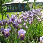 Chemin fleuri - Jardins d'eau