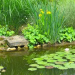 Berges - Jardins d'eau