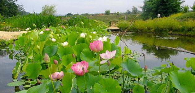 Jardins d'eau a Carsac