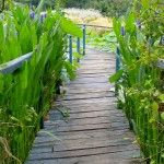 Ponton - Jardins d'eau