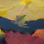Rainette - Jardins d'eau