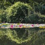 Reflets - Jardins d'eau