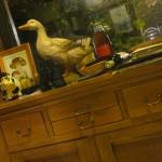 Lacombe - canard