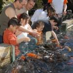 Aquarium du Bugue - animation nourissage