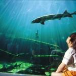 Aquarium du Bugue - esturgeon
