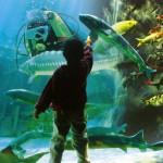 Aquarium du Bugue - plongeur