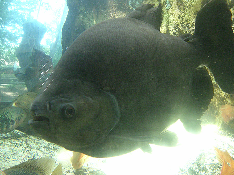 l aquarium du p 233 rigord noir dordogne p 233 rigord noir