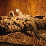 Aquarium perigord noir reptiles
