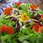 salade fleurs comestibles - Auberge Layotte